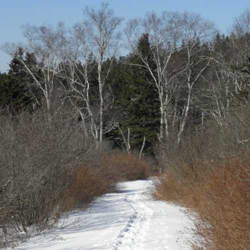 schoodic path in snow