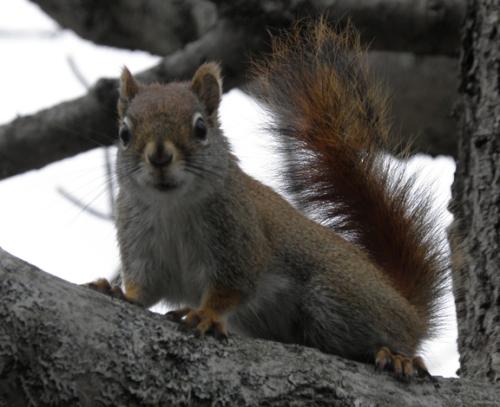 noisysquirrel
