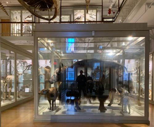 blogmuseumviewwithreflections